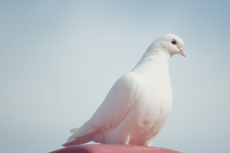 הסליחה מטהרת | צילום אתר pexels