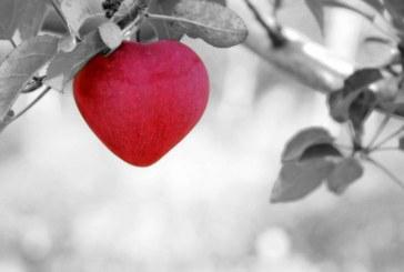 אהבה: שכירה או עצמאית